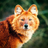 Othiel's avatar