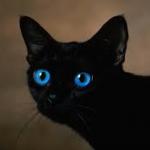Kociara*99's avatar