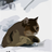 CatGopher98's avatar