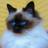 Caroblo147's avatar