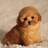 Dayois4's avatar