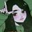 Slowsofa AJPW's avatar