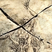 Copper5's avatar