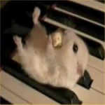 A Hamster On A Piano