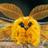 Reflectedorder's avatar
