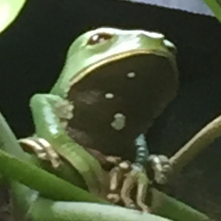 Jongolini's avatar
