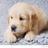 Cookiekitty106000's avatar