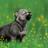 ThunderWolf600's avatar