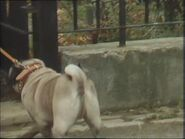 Willy (25 December 1986 - Part 1)