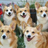 I like corgis's avatar
