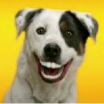 Hiena113's avatar
