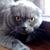Mr. Hissing Cat