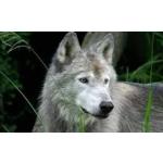 Wolf11200's avatar