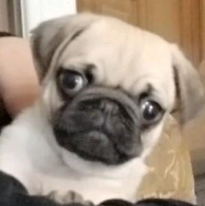 Lil brownie's avatar