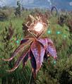 Vegetation.png