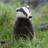 22FeetDeep's avatar