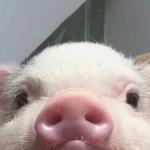 SashaTheLemon's avatar