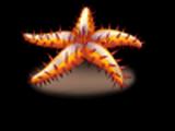 Estrela espinhosa