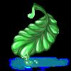 Feuille succulente
