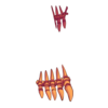 Buty Skeleton Witch 3
