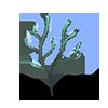 Algue gazeuse