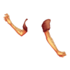 Rękawiczki Clause's Maiden 5