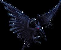 Pterocorvus Adulto