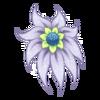 Kwiat Shy Nenuphar 11
