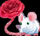 Musarose Adult