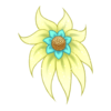 Kwiat Shy Nenuphar 12