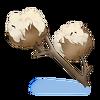Kwiat bawełny