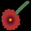 Kwiatek8