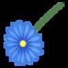 Kwiatek7