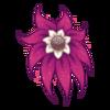 Kwiat Shy Nenuphar 8