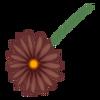 Kwiatek9