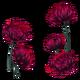 FloresMortíferas01