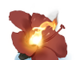 Fleur Flamme
