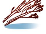 Algas Desidratadas