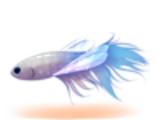 Peixe Libélula