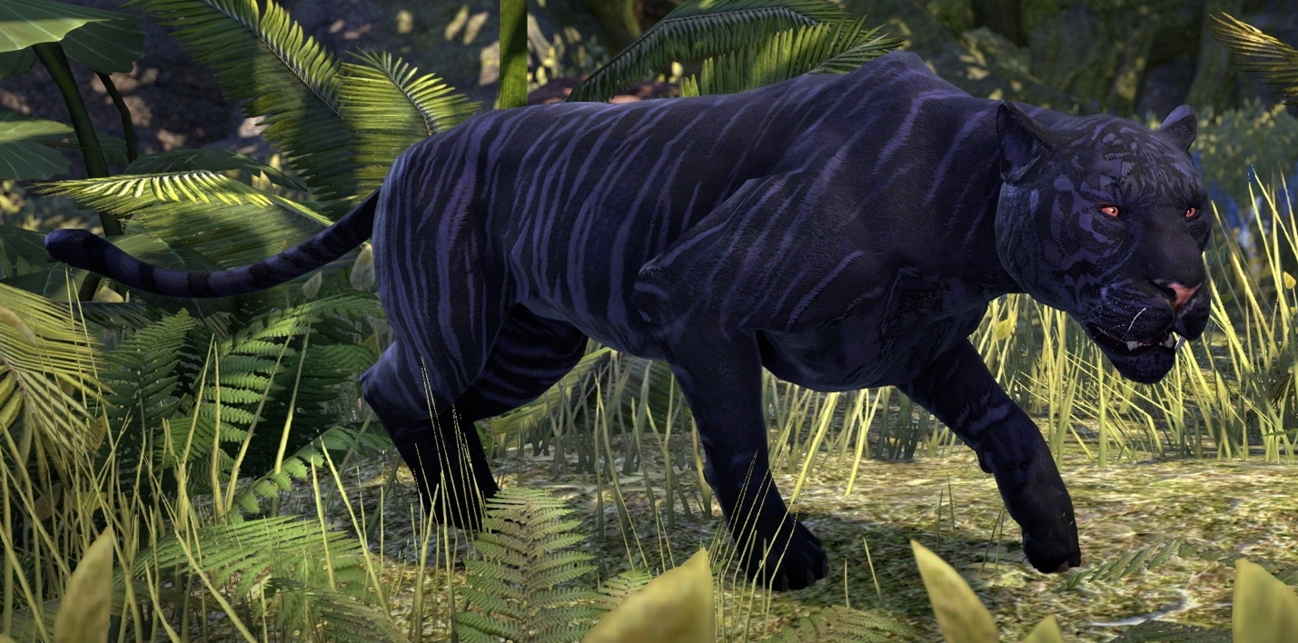 Striped Senche-Panther