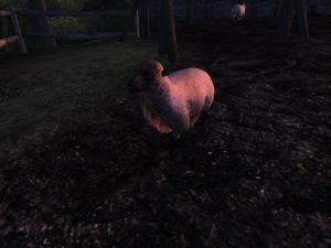 Овца (Oblivion) 2