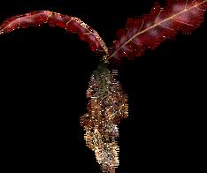 Алый корень Нирна (Skyrim).png