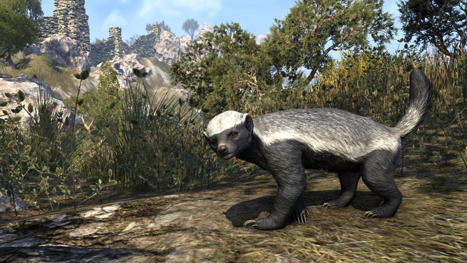 Colovian Badger