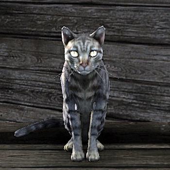 Cat (Online)