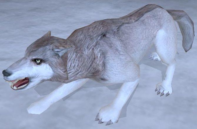 Wilk śnieżny