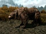 Urso (Skyrim)