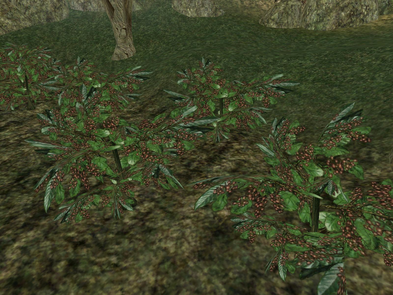 Комуника (Morrowind)