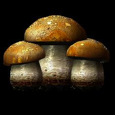 Бесовский гриб.png