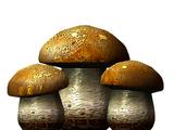 Бесовский гриб (Skyrim)