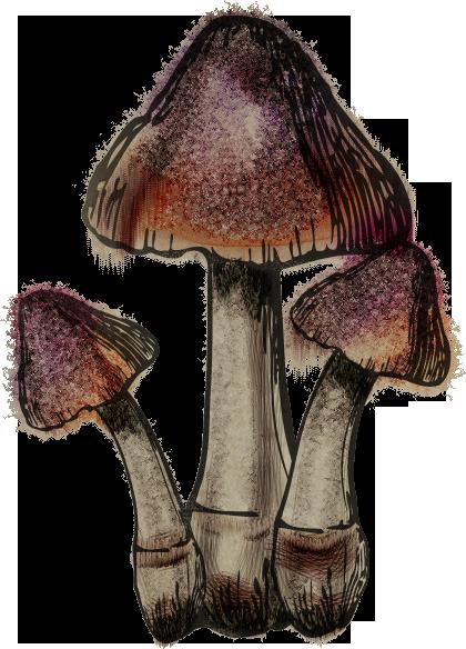 Guía del herbolario de Skyrim
